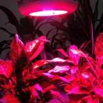 Led plante lys